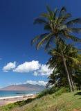 Palmen in Maui Royalty-vrije Stock Afbeeldingen