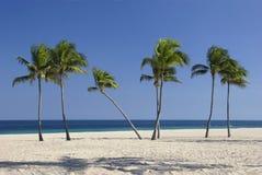 Palmen met één die buigen royalty-vrije stock afbeelding