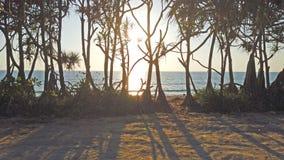 Palmen met lange schaduwen bij zonsondergang stock videobeelden