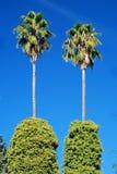 Palmen met mooie blauwe hemel Royalty-vrije Stock Foto