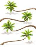 Palmen met Schaduw Vector Royalty-vrije Stock Afbeeldingen
