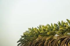 Palmen met veel lege lege exemplaarruimte voor tekst royalty-vrije stock afbeeldingen