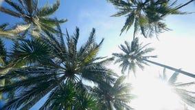 Palmen met zonnige blauwe hemel stock videobeelden