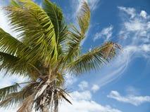 Palmen in Mexico Royalty-vrije Stock Afbeeldingen