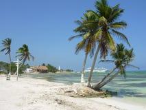 Palmen in Mexico Royalty-vrije Stock Afbeelding