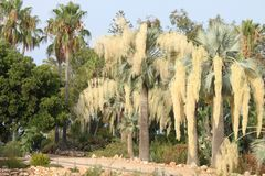 Palmen mit gelben Klappen lizenzfreie stockfotos