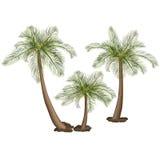Palmen mit grünen Blättern Lizenzfreie Stockbilder