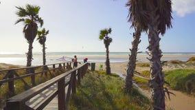 Palmen mit Holzbrücke auf Meer im Hintergrund Zwei kitesurfers gehen zum Meer stock video footage