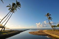 Palmen naast de oceaan door een inham Stock Fotografie