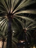 Palmen nachts Stockfoto