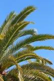 Palmen - Nahaufnahmeansicht Lizenzfreies Stockbild