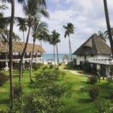 Palmen nahe dem Ozean lizenzfreie stockfotografie