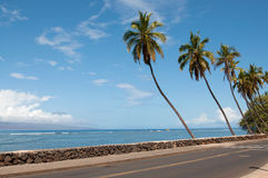 Palmen nahe der Straße lizenzfreie stockbilder