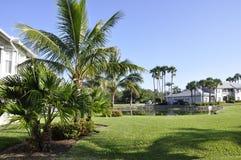 Palmen in Napels, Florida Stock Afbeelding