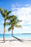 Palmen in Nassau Royalty-vrije Stock Foto