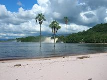 Palmen in Nationalpark Canaima lizenzfreies stockfoto