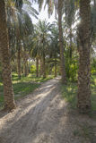 Palmen in Oase royalty-vrije stock afbeeldingen