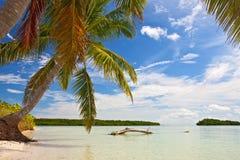 Palmen, oceaan en blauwe hemel op een tropisch strand Stock Fotografie