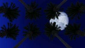 Palmen onder de maan royalty-vrije illustratie