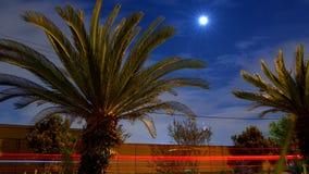 Palmen onder de maan royalty-vrije stock foto