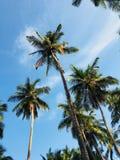 Palmen onder de mooie hemel stock fotografie