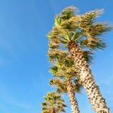 Palmen onder een blauwe hemel Royalty-vrije Stock Afbeelding