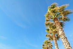 Palmen onder een blauwe hemel Stock Afbeeldingen
