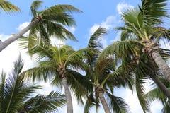 Palmen op blauwe en witte hemel royalty-vrije stock afbeelding