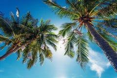 Palmen op Blauwe Hemel Royalty-vrije Stock Afbeeldingen