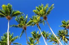 Palmen op blauwe hemel Stock Foto