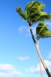 Palmen op blauwe hemel Stock Foto's
