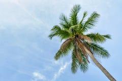 Palmen op Blauwe Hemel Royalty-vrije Stock Fotografie