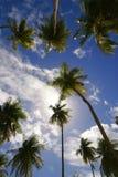 Palmen op blauwe hemel royalty-vrije stock foto's