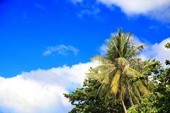 Palmen op blauwe hemelachtergrond Royalty-vrije Stock Fotografie