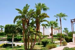 Palmen op blauwe hemelachtergrond Royalty-vrije Stock Foto