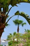Palmen op blauwe hemelachtergrond Royalty-vrije Stock Foto's