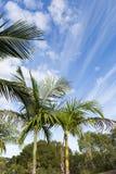 Palmen op blauwe hemelachtergrond met gevormd cloudscape Royalty-vrije Stock Foto