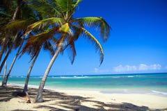 Palmen op Caraïbisch strand royalty-vrije stock afbeelding