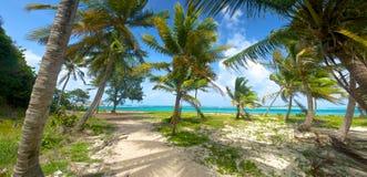Palmen op Caraïbische Kust Stock Afbeeldingen