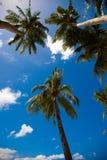 Palmen op de achtergrond van een blauwe hemel Stock Fotografie