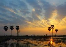 Palmen en mooie zonsondergang Stock Foto's