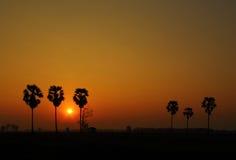 Palmen en mooie zonsondergang Royalty-vrije Stock Foto's