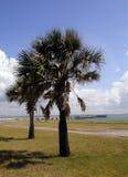 Palmen op de Golf Royalty-vrije Stock Foto
