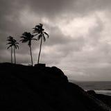 Palmen op de kust Royalty-vrije Stock Foto's