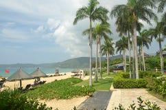 Palmen op de kust, de gulle gift, Yalong-baai, China, Hainan Stock Fotografie
