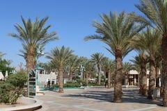 Palmen op de waterkant Stock Foto's