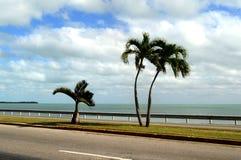 Palmen op de weg op een zonnige dag Varadero, Cuba stock afbeelding