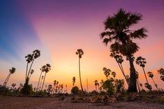 Palmen op droog land Stock Foto's
