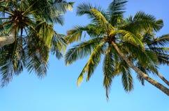 Palmen op een achtergrond van blauwe hemel Stock Foto