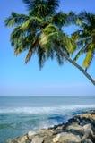 Palmen op een achtergrond van blauwe hemel Stock Foto's